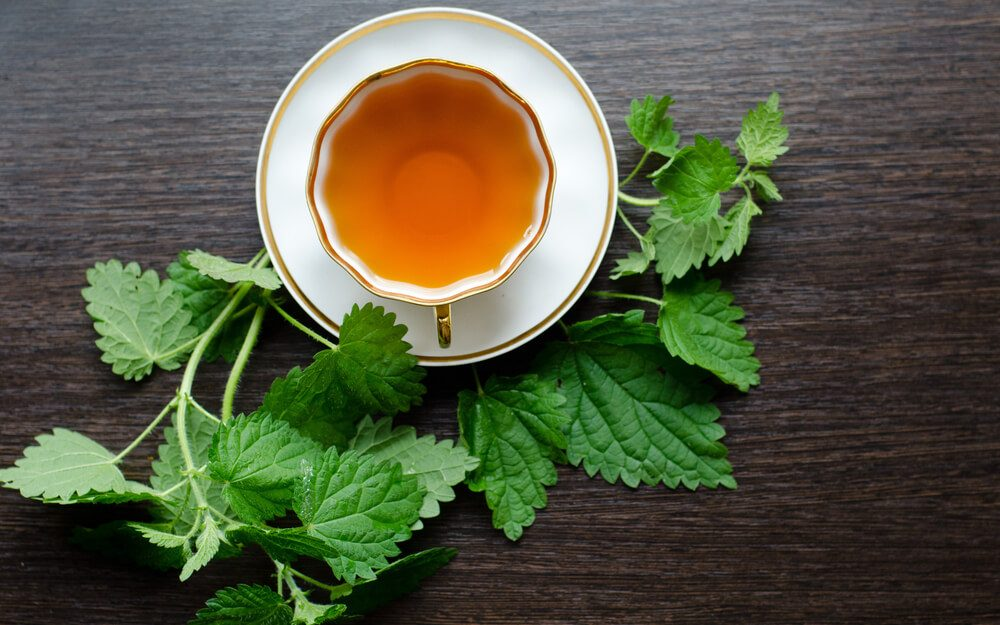 The Brewing Nettle Tea and Its Amazing Health Benefits for your Life