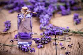 LAVENDER OIL – HOW IS IT MADE AND what's IT USED FOR