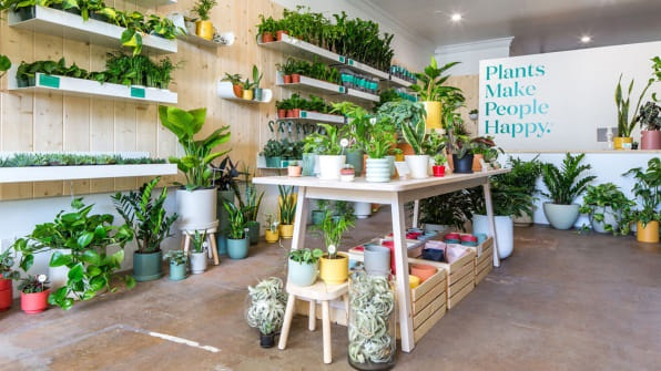 Consider These Points While Buying Plants Online!