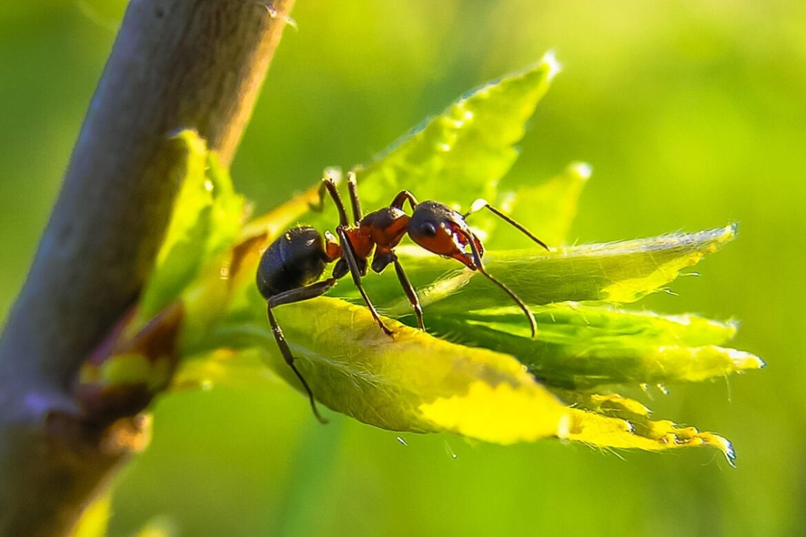 5 Reasons Your Ant Problem Just Doesn't Go Away