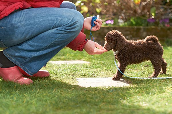 How To Determine If Your Pet Has a Medical Emergency