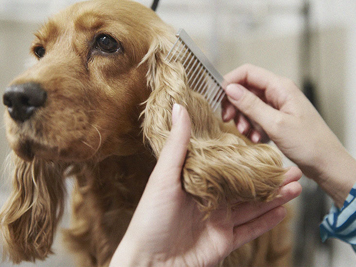 6 Ways to Get Rid of Fleas for Your Dogs