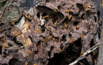 Remove Termites From A Property