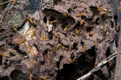 Five Signs That Show Your Home Has Termites