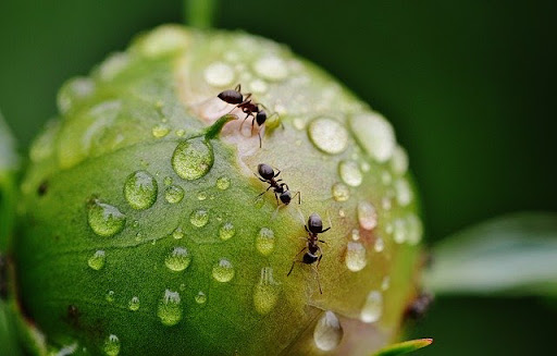 Keeping Ants Away From Your Home