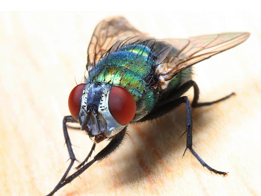 How To Keep Pests Away From Your Home Or Office?