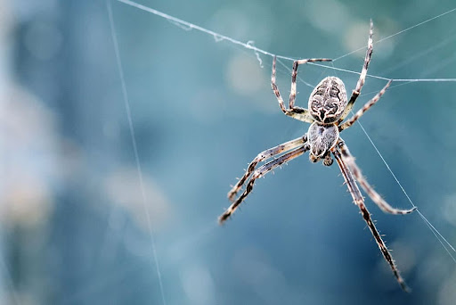 Spider Proofing Your Property